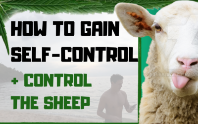 Sheep are hard to lead….